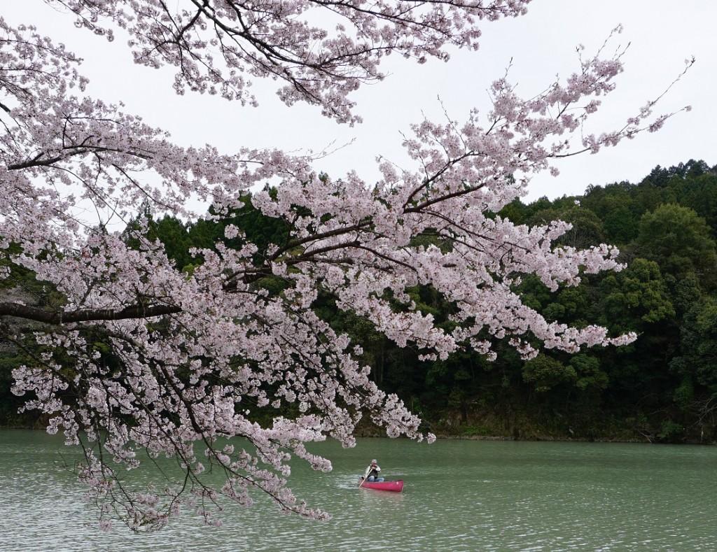 三重県花見カヌー 体験ツアー 『さくらの里公園⇔もみじ館』