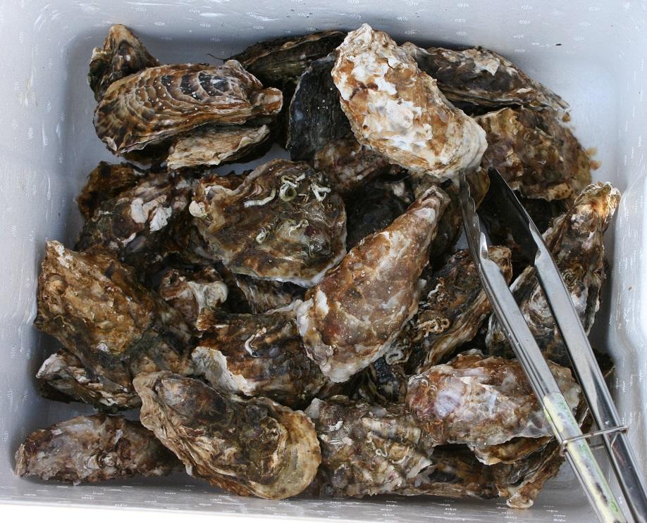 三重県鳥羽産『浦村かき』で、焼き牡蠣・バーベキュー会をしました