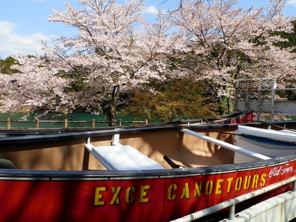伊勢志摩で愛犬と花見カヌー体験ツアー